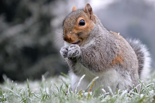 Frosty Squirrel
