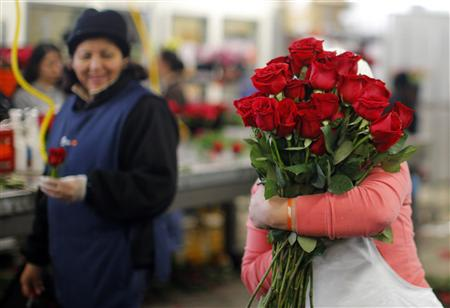A worker carries an armload of red roses at Winston Flowers in Boston, Massachusetts February 13, 2013, the day before Valentine's Day. According to Winston Flowers, they will deliver 350,000 roses on Valentine's Day. REUTERS/Brian Snyder