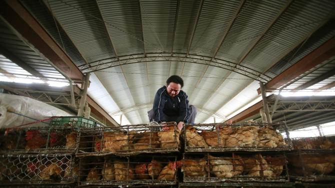 A worker arranges containers  of chickens at a wholesale market on Thursday, April 4, 2013, in Shanghai, China. In a worrisome sign, a bird flu in China appears to have mutated so that it can spread to other animals, raising the potential for a bigger threat to people, scientists said Wednesday. (AP Photo)