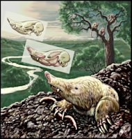 The Miocene mammal Necrolestes patagonensis ventures out of its burrow 16 million years ago in Patagonia, present-day Argentina. Necrolestes is now recognized as a member of a group long thought to have become extinct shortly after the extincti