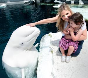 Pregnant Sarah Michelle Gellar, Daughter Charlotte Pet a Beluga Whale!