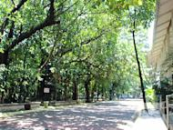 "The 2.2-hectare Arroceros Forest Park park is the only remaining patch of green ""secondary"" forest in Manila, composed of about 60 species of trees. The park was once a barter area trading area between Filipino rice dealers and visiting Chinese and Malay traders."