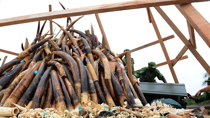 Soldiers arrange a pyre of elephant tusks and thousands of pieces of worked ivory as they prepare to burn ivory stocks corresponding to roughly 850 dead elephants, in Libreville, Gabon, Wednesday, June 27, 2012. Conservation organization WWF lauded Gabon's destruction of its ivory stocks, saying the move demonstrated the country's commitment to curbing poaching and the illegal ivory trade. CITES, the world body which regulates the international wildlife trade, last week issued a report saying that elephant poaching in Africa is at its highest rates since monitoring began in 2002. (AP Photo/Joel Bouopda Tatou)