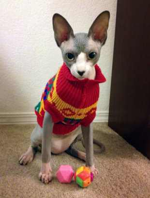 These 26 Cats Wearing Christmas Sweaters Will Put A Smile On Your Face image Sphynx Cat in Christmas Sweater 456x600