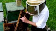 Bill Termeer shows some of his hives in this video still.