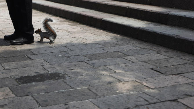 A squirrel smells the feet of a man in Mexico City