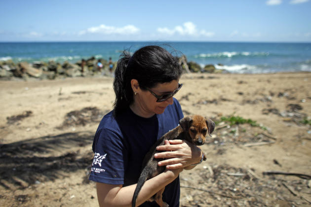 The Humane Society of the United States is working with the Puerto Rican government on a wide-ranging project to improve the lives of animals in the commonwealth. The HSUS will address the problems of