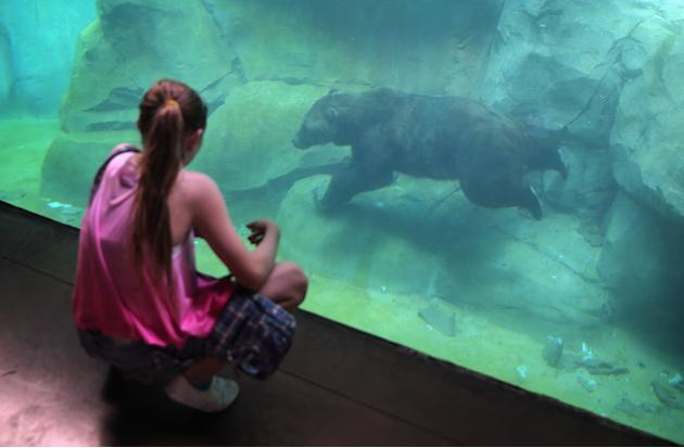 Chicago's Brookfield Zoo Tries To Keep Animals Cool During Heat Wave