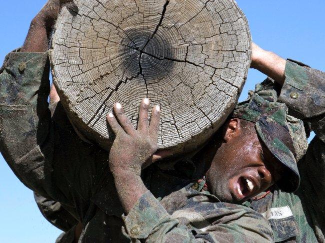 log training seal school