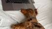 Is 'Netflix for dogs' worth the cost?
