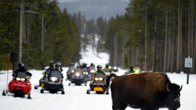 FILE - This Jan. 3, 2003 file photo shows a lone bison crossing a road ahead of a pack of snowmobilers in Yellowstone National Park, Wyo. The National Park Service has been studying and taking comment on an initial plan to allow up to 480 snowmobiles plus 60 multiple passenger snow coaches per day into Yellowstone during the winter (AP Photos/Craig Moore, file)