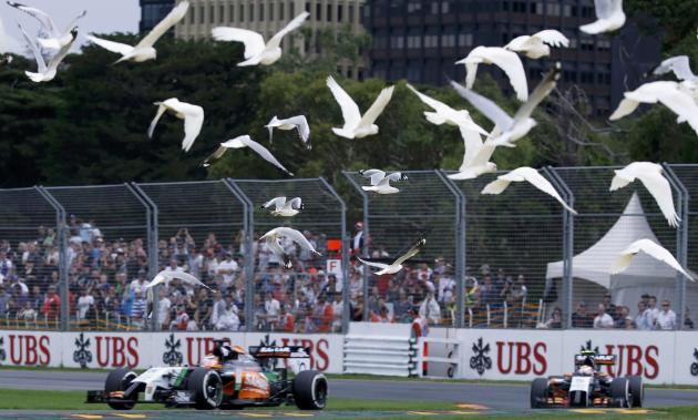 A flock of bird flies above Force India Formula One cars during the qualifying session for the Australian F1 Grand Prix in Melbourne