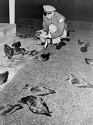 1961 photo of an official examining dead sea birds in Monterey Bay