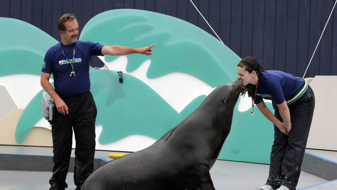 Sea lion Duke performs with trainers Guenter Skammel and Angela Coccoma during a preview of the sea lion show at the New York Aquarium, in the Coney Island section of the Brooklyn borough of New York,  Friday, May 24, 2013. Playful sea lions and trusty penguins are welcoming visitors back to the Wildlife Conservation Society's shorefront aquarium for the first time since the marine haven was damaged by Superstorm Sandy. (AP Photo/Richard Drew)