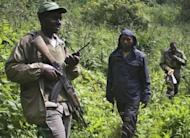 Armed rangers patrol the Virunga National park in Rwanda to protect the habitat of the Agashya family of mountain gorillas. The total world population is estimated at 790, 480 of whom live here in the Virungas, the remainder in Uganda's Bwindi Impenetrable Forest