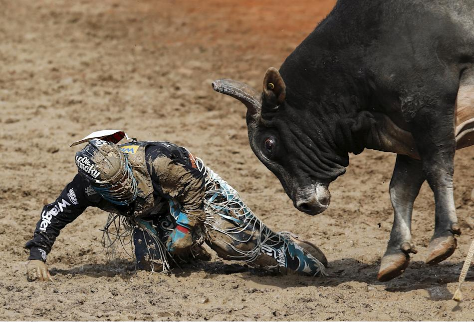 The bull Smoke Show goes after Lee of Fort Worth, Texas after he got bucked off in the Bull Riding event during Championship Sunday at the finals of the Calgary Stampede rodeo in Calgary