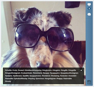 Hashtag Horror: When Hashtags Get Out Of Control image dog hashtag