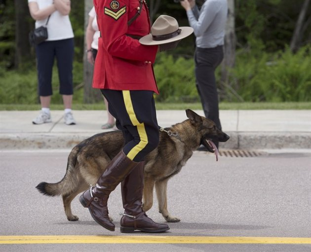 An officer holds Const. DaveRoss's Stetson with Ross's dog Danny at the funeral procession for the three RCMP officers who were killed on duty, at their regimental funeral at the Moncton Coliseum in Moncton, N.B. on Tuesday, June 10, 2014. Danny, the RCMP police dog whose partner was killed in last week's shooting rampage in New Brunswick, will eventually be teamed up with another handler. THE CANADIAN PRESS/Andrew Vaughan