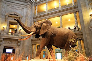 70 New (Really) Marketing Automation Stats image 320px USA National Museum of Natural History0