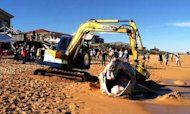 Body Of Endangered Whale Washes Up On Beach