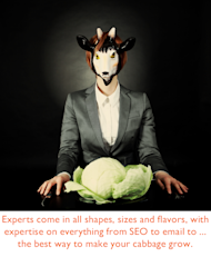 50+ Expert Resources for Internet Marketers image make your cabbage grow 2
