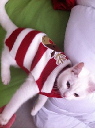 These 26 Cats Wearing Christmas Sweaters Will Put A Smile On Your Face image Stripped Christmas Sweater For Cat 448x600