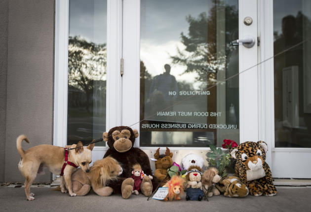 Bernie the dog sniffs stuffed animals placed at the doorstep of Dr. Walter Palmer's River Bluff Dental office in Bloomington, Minn., Tuesday, July 28, 2015. Palmer, accused of illegally killing a