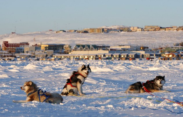 Sled dogs rest on the frozen Frobisher Bay in Iqaluit in this file photo. (Reuters)