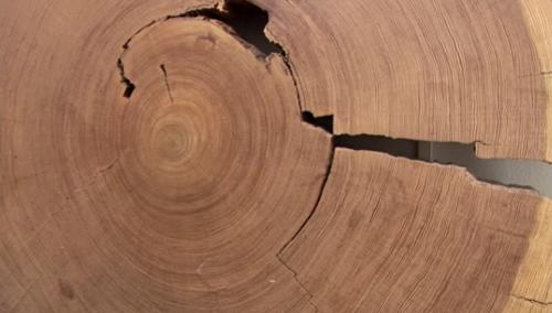 The density and width of tree rings shows how warm it was during each year's growing season, and thereby serves as a record of long-term climate trends.