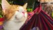好享受~貓咪躺在吊床上享受日光浴