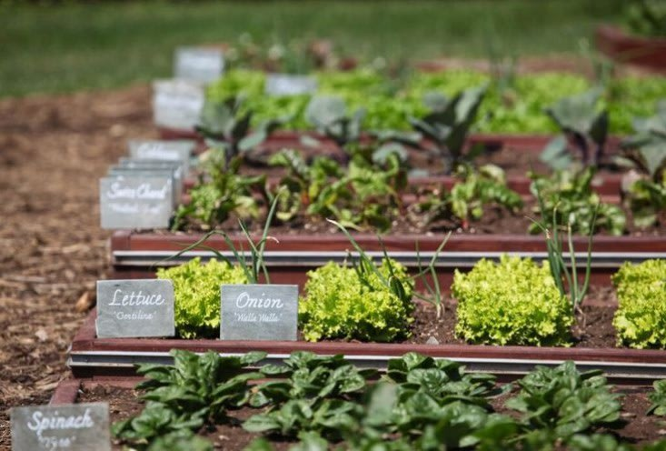 10 Garden Ideas To Steal From Michelle Obama Yahoo Homes