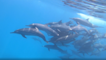 'Sound On': Underwater Photographer Listens in as School of Dolphin Swim By
