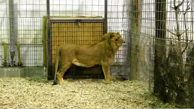 Mexican circus animals arrive in U.S.