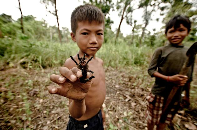 The five year old children hold the spiders in their hands as if they were harmless (Caters)