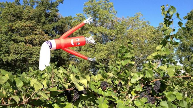 Inflatable Flailing Arm Tube Men Double as Scarecrows
