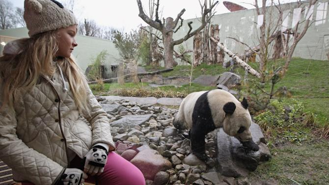 Edinburgh Zoo's Pandas Meet The Public For The First Time