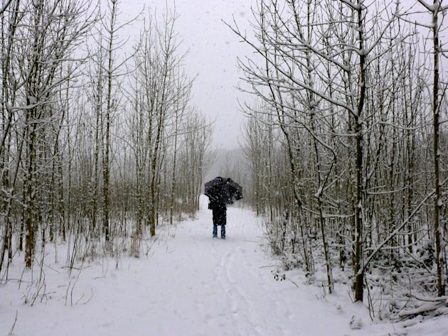A walker trudges through heavy snowfall in Clayfield Copse, Berkshire (Geoffrey Swaine/ Rex Features)