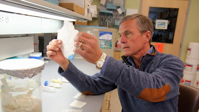 "This undated handout photo provided by the University of Pittsburgh Medical Center shows Dr. Stephen Badylak, a surgery professor at the university, and deputy director of the McGowan Institute for Regenerative Medicine, holding a sheet of ""extracellular matrix,"" scaffolding-like material derived from pig bladder. His team implanted a similar version, designed for use in humans, into a handful of men with severe leg injuries and reported Wednesday that the experimental treatment helped regrow muscle. (AP Photo/University of Pittsburgh Medical Center."