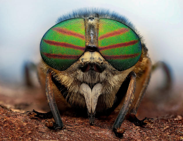 Bugs In Shades