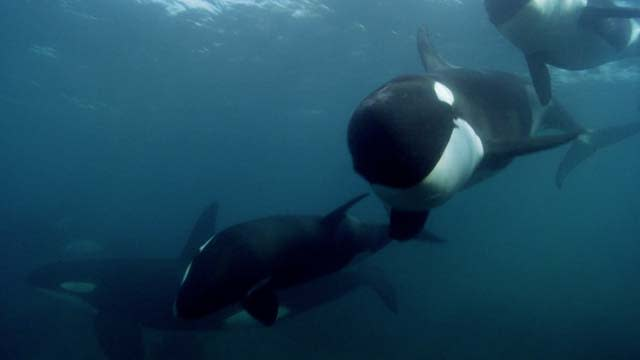 'Blackfish' Theatrical Trailer