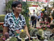 Benguet native Elaine Daclis has been selling different varieties of cactus since 1970. Cacti easily grow in Benguet with its good cold weather and she says there's a big demand of cacti grown from the province.
