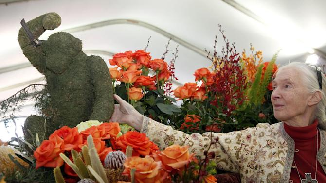 Jane Goodall, the world's foremost expert on chimpanzees looks over flowers in Pasadena, Calif., Monday, Dec. 31, 2012. Goodall will be the Grand Marshall of the 2013 Rose Parade in Pasadena, Calif. New Year's Day. (AP Photo/Nick Ut)