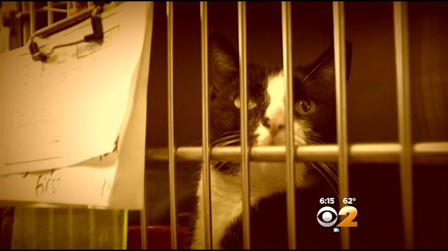 Man calls 911 after 4-Hhour standoff with 'aggressive' cat.