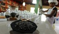 A Sri Lankan teamaker is seen preparing virgin white tea at a factory shop in Ahangama, some 140km south of Colombo. Sri Lanka is known for its exotic tea and is a top exporter of the commodity, but the industry is deeply divided over plans to boost earnings by importing cheaper tea for blending and re-export