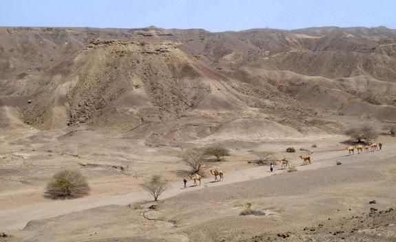 Earliest Human Species Possibly Found in Ethiopia