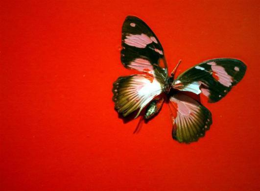 The art of Damien Hirst