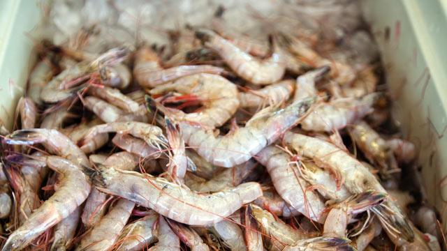 Antibiotics Illegal in the US Found in Samples of Foreign Shrimp