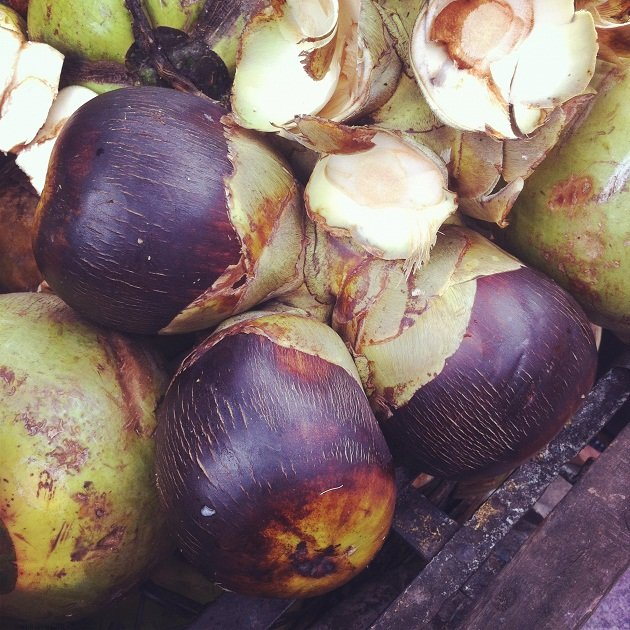 Sea coconut didn't come from the sea…