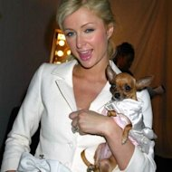 paris hilton and chihuahauas