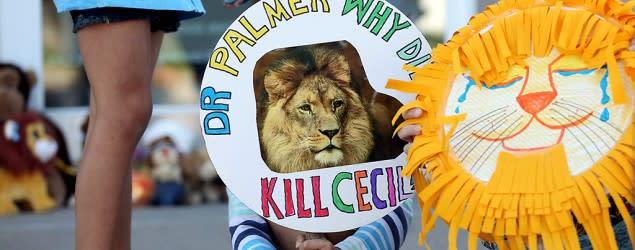 Wildlife agency unable to reach Cecil's killer